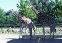 girafes_003.jpg